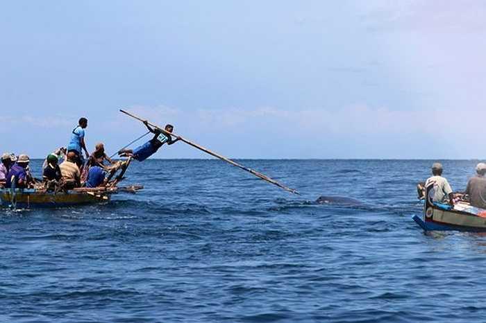 Khi ra khơi, họ sử dụng những ngọn giáo dài hàng mét để đâm cá