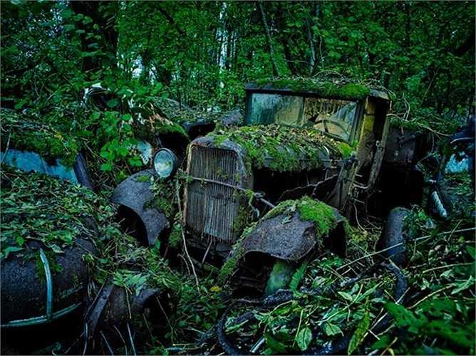 Rêu xanh phủ kín xe trong một khu rừng ở Đức