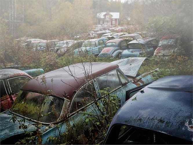 Hàng trăm chiếc xe cũng trong nghĩa địa xe ở Thụy Điển.