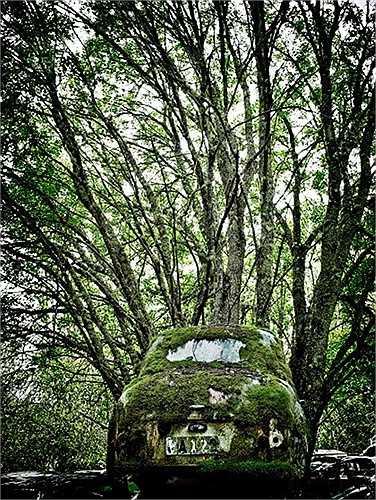 Rêu phủ kín trong nghĩa địa.