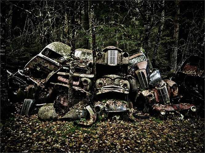 Những ô tô cũ đổ nát, đè lên nhau trong khu rừng sâu bí ẩn