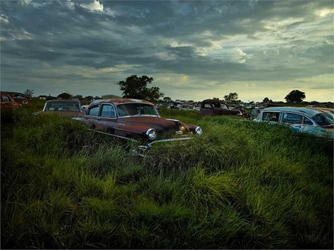 Cỏ mọc đầy, che khuất những xe ô tô cũ trong nghĩa trang ở Pháp.