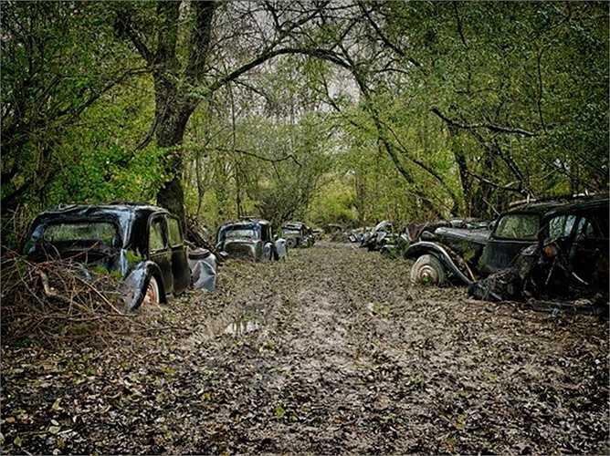 Những chiếc xe ô tô ngập chìm trong bùn lầy ở khu rừng sâu tại Pháp.