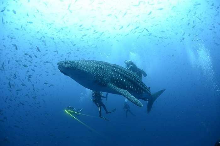 Các nhà khoa học khám phá vùng biển đảo Galapagos, Thái Bình Dương