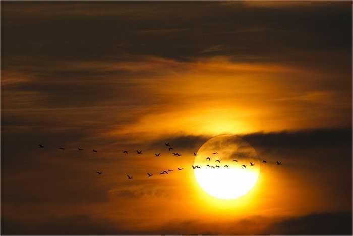 Đàn chim di cư trong ánh hoàng hôn qua vùng trời Berlin, Đức