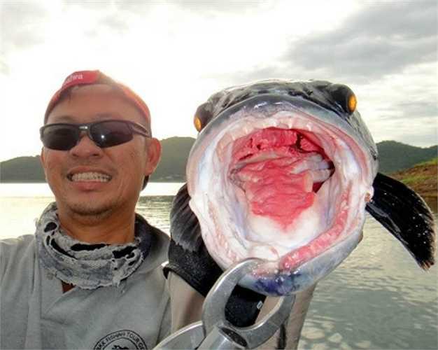Cá mặt quỷ là loài cá có bộ mặt dữ tơn, bộ răng nhọn hoắt và sắc như dao.
