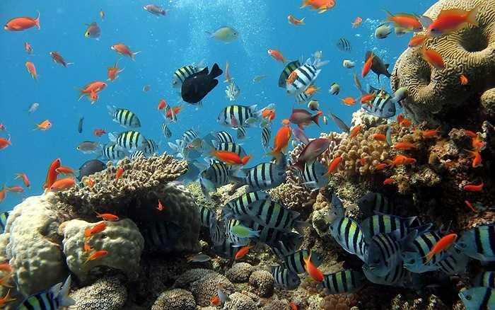 Đến Hòn Mun, du khách lặn biển khám phá san hô, đi thuyền đáy kính ngồi ở những quán bar nổi lênh đênh trên mặt biển...Tại Hòn Tằm ngoài bãi tắm tuyệt đẹp, du khách còn có thể ngắm nhìn cả thành phố Nha Trang ở hướng Bắc và bán đảo Cam Ranh ở phía Nam.