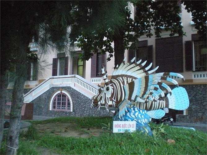5. Viện Hải dương học Nha Trang: là nơi lưu giữ rất nhiều loài sinh vật biển kỳ lạ, được thành lập vào năm 1923 và nằm tại số 1 Cầu Đá, cách trung tâm thành phố Nha Trang khoảng 6km về phía Đông Nam.