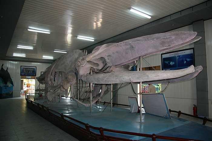 Nơi đây có trên 20.000 mẫu vật của 4.000 loại sinh vật biển được sưu tầm và gìn giữ trong nhiều năm. Đặc biệt tại đây trưng bày một bộ xương cá voi khổng lồ dài gần 26m, cao 3m với 48 đốt sống đã được phục chế đầy đủ.