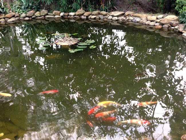 Theo nhận định về bất động sản, khu đất này của gia đình Mỹ Linh có giá tương đương 1 triệu đô, trên 20 tỷ đồng, chưa kể các trang thiết bị phòng thu hiện đại bậc nhất Việt Nam.