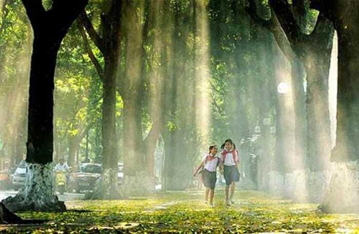 Đường Hoàng Diệu, Phan Đình Phùng và xung quanh khu vực Lăng Bác: Khu vực này đẹp nhất là vào mùa thu, khi lá vàng rụng khắp vỉa hè, mặt phố và những tia nắng rực rỡ chiếu qua tán cây.