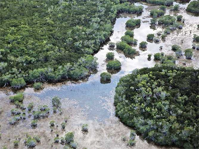 Everglades, vùng đất ngập nước ở bang Florida đang bị xem là nơi có nguy biến mất cao nhất ở Mỹ. Quá nhiều nước và sự xuất hiện của các loài mới, cộng thêm sự phát triển đô thị đến chóng là một trong những nguyên nhân chính.