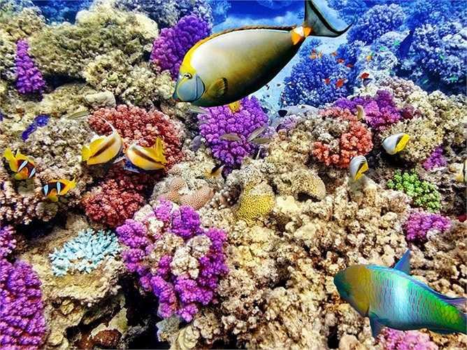 Rạn san hô lớn nhất thế giới, Great Barrier Reef của Úc đã giảm hơn một nửa kích thước vì nhiệt độ tăng lên trong 30 năm qua. Hiện tượng ô nhiễm axit cũng xảy ra ngày một trầm trọng hơn, khiến những rặng san hô vốn màu sắc rực rỡ dần bị 'tẩy' thành màu trắng đục. Các nhà khoa học dự đoán nơi đây có thể biến mất hoàn toàn vào năm 2030.