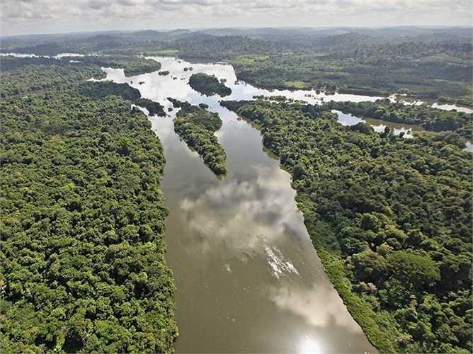 Rừng Amazon của Brazil là khu rừng nhiệt đới lớn nhất và đa dạng loài nhất trên thế giới. Tuy nhiên việc mở rộng đất canh tác nông nghiệp tại đây có thể dẫn đến sự hủy diệt khu rừng này.