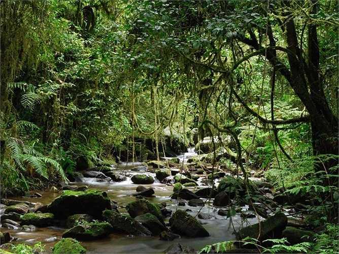 Những khu rừng của Madagascar được dự đoán sẽ chỉ còn tồn tại trong khoảng 35 năm tới vì vô số những vụ cháy và chặt phá rừng hàng loạt.