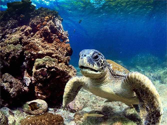 Hậu quả của việc có quá nhiều khách du lịch nước ngoài và các loài xâm thực đang đe dọa hệ sinh thái và các sinh vật bản địa độc đáo của quần đảo Galapagos, một nhóm các hòn đảo ngoài khơi bờ biển của Ecuador.