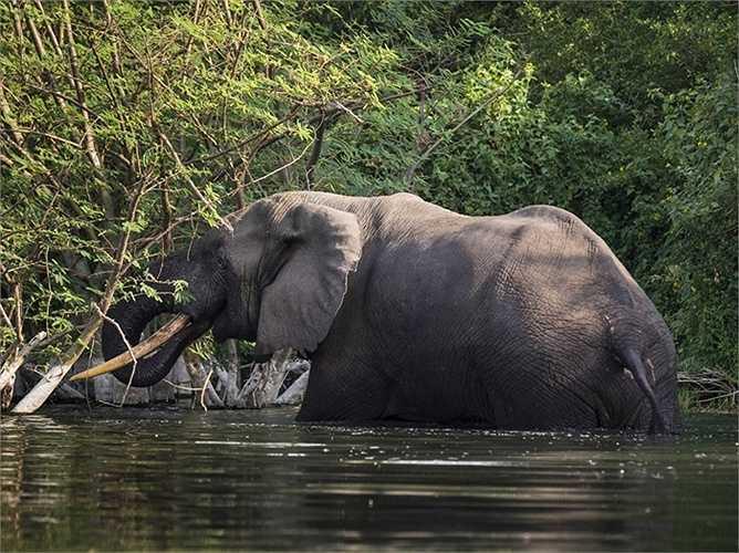Lưu vực sông Congo của châu Phi, nơi có rừng nhiệt đới lớn thứ hai trên thế giới với hơn 10.000 loài thực vật, 1.000 loài chim và 400 loài thú có thể sẽ hoàn toàn biến mất vào năm 2040 do khai thác bất hợp pháp, theo dự báo của Liên Hợp Quốc.