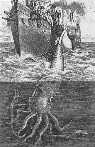 Cho đến trước năm 2001, một con mực khổng lồ vẫn được cho là một sinh vật huyền thoại khủng khiếp.