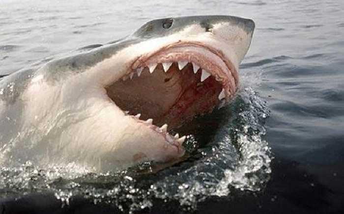 White Shark Cafe là một địa danh ở giữa Thái Bình Dương và chính là nơi cá mập trắng lớn tụ tập để giao phối.