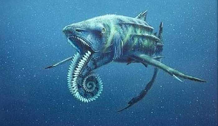 Một con số kinh hoàng khác có thể bạn chưa biết là 99% tất cả các loài cá mập đã bị tiêu diệt.