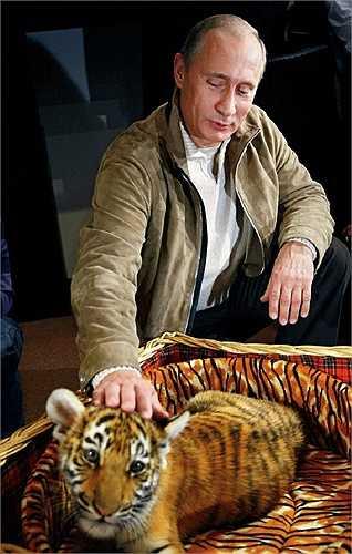 Ông Putin vuốt ve hổ con, là món quà ông nhận được trong dịp sinh nhật
