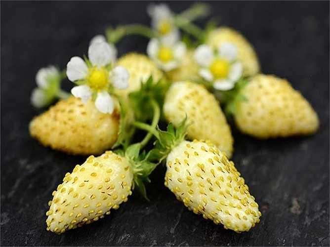 Việc trồng dâu tây vàng gặp khó khăn hơn rất nhiều so với các loại dâu tây trắng, đỏ thường thấy. Vì thế, loại quả này chủ yếu được các nhà hàng cao cấp mua về chế biến các món hoa quả, làm bánh hoặc trang trí món ăn.