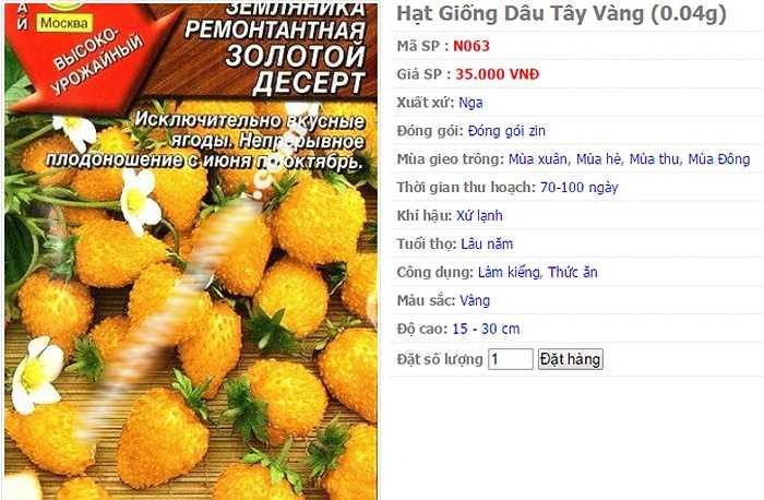 Trên thị trường, giá hạt giống dâu tây vàng dao động từ 35.000 - 40.000 đồng/gói. Khảo sát một số trang bán hàng trực tuyến, giá hạt giống dâu tây vàng từ 2 - 3 USD/gói. (nguồn:kienthuc.net.vn)