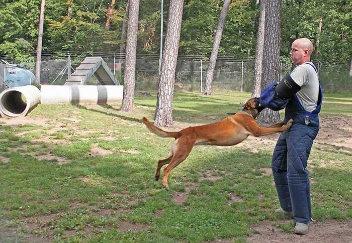 Những con chó được huấn luyện đặc biệt tại đây nhằm phục vụ công việc phá dò tìm bom