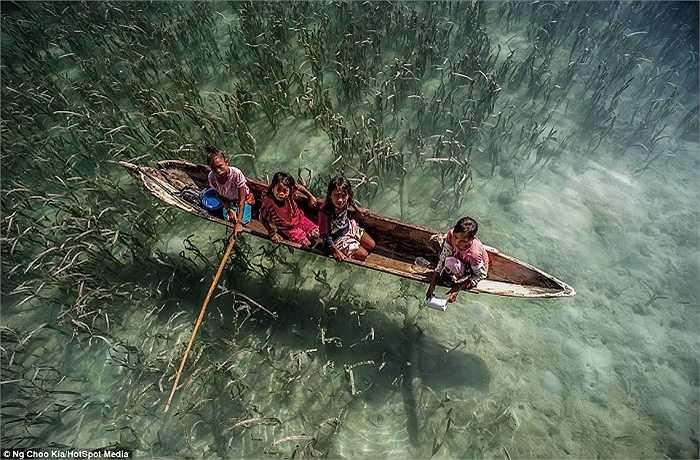Người Bajau  tin vào thế giới tâm linh của biển và cho rằng biển là ngôi nhà chung