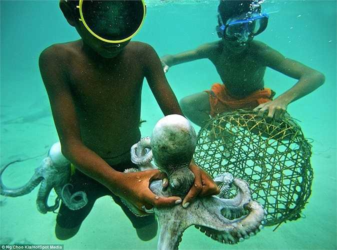 Thậm chí, chúng còn trở thành thợ lặn chuyên nghiệp khi còn nhỏ