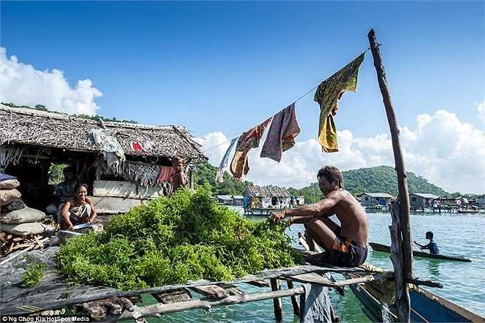 Thỉnh thoảng cư dân Bajau cùng vào đất liền để bán hải sản và mua sắm những vật dụng cần thiết hoặc sửa thuyền