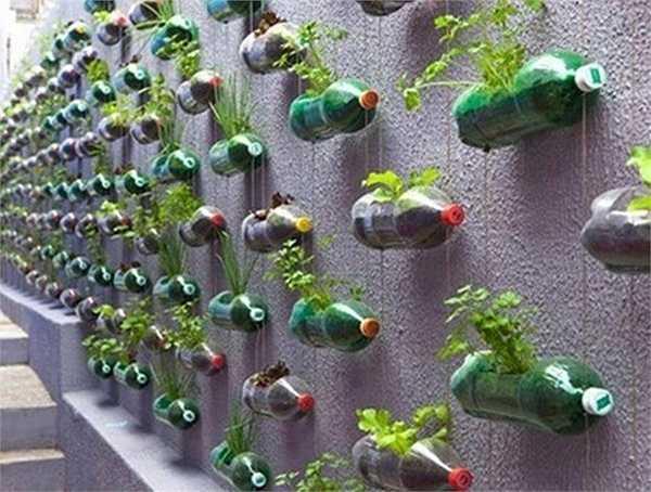 Vườn rau từ những chai nhựa cũng là cách chị Nguyễn Thị Thu Phương ở Quán Thánh (Ba Đình, Hà Nội) tận dụng để có rau sạch cho cả gia đình.