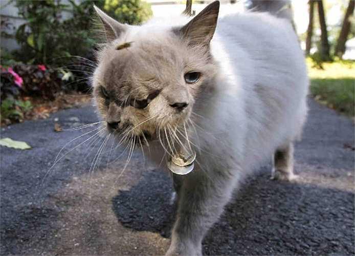 10. Mèo hai đầu. Chú mèo Frank and Louie đã rất nổi tiếng trong thời gian vừa qua. Chú đã qua đời ở tuổi 15 và được ghi nhận là con mèo 2 đầu sống lâu nhất