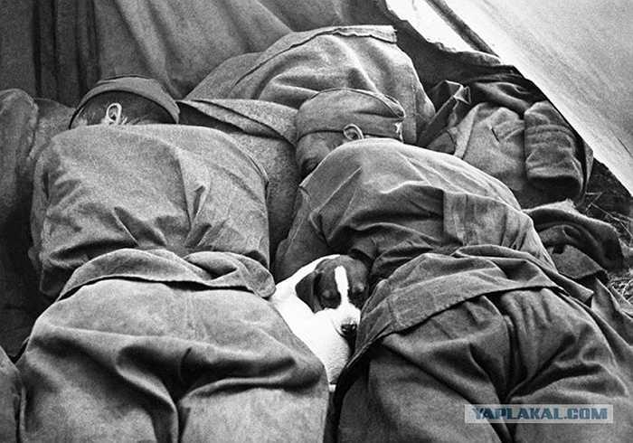 Các chiến sỹ Hồng quân ngủ trưa cùng chú chó của mình