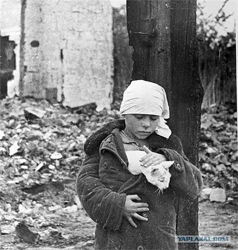 Cô bé và chú mèo bên cạnh ngôi nhà đổ nát ở làng Smolensk, năm 1941