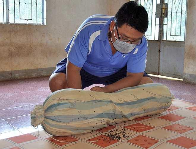 Hiện tượng bọ đậu đen về làm tổ trong nhà dân ở ấp Lạc Sơn (xã Quang Trung) diễn ra gần một tháng nay. Người dân nơi đây cho biết, bọ bay thành từng đàn với số lượng lớn. Chúng không đốt, hút máu người, nhưng có mùi hôi rất khó chịu.