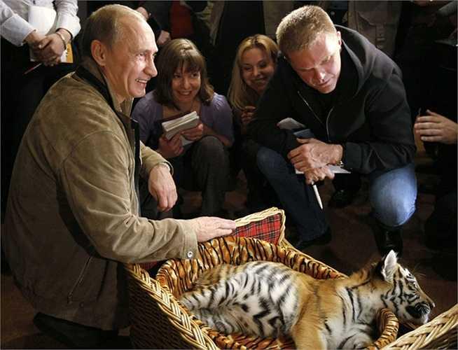 Thủ tướng Nga Vladimir Putin giới thiệu các nhà báo con hổ con mà ông được tặng nhân dịp sinh nhật, ngày 7/10