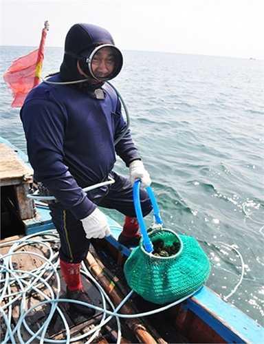 Khác với đánh bắt thủy sản xa bờ, ngư dân Lý Sơn đầu tư khoảng 20 triệu đồng đóng tàu cá công suất nhỏ, mua máy nén khí, hệ thống dây hơi cùng quần áo, kính để hành nghề lặn bắt ốc xà cừ ở độ sâu khoảng 10m.