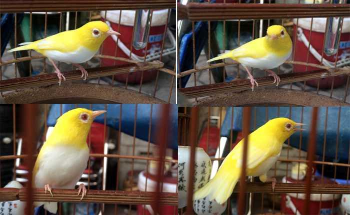 chim biến đổi