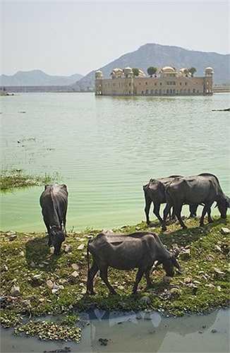 Nhiều đồn đại cho rằng cung điện bị bỏ hoang này bị ma ám với nhiều vết nứt xuất hiện.