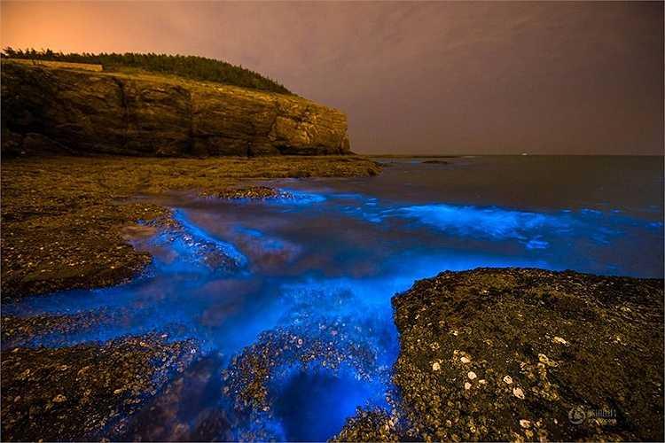 Các vi sinh vật phát sáng, vùi vào cát để tạo ra hiện tượng kỳ lạ này. Có một loài tảo gọi là Dinoflagellata phát ra ánh sáng như đom đóm khi bị sóng tác động. (Nguồn: 163)