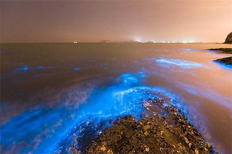 Loài tảo Dinoflagellata rất nhạy cảm với môi trường nước. (Nguồn: 163)
