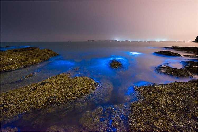 Hiện tượng này còn xuất hiện ở Australia, Puerto Rico, Maldives, trong đó nổi tiếng nhất là đảo Vieque thuộc Puerto Rico. (Nguồn: 163)