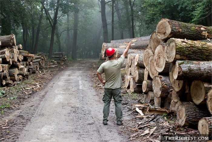 Tiều phu. Tỷ lệ tử vong: 104/100.000 - Chưa kể đến nguy cơ tai nạn lao động gặp phải khi đốn hạ các thân cây quá cao, những người tiều phu luôn phải đề nguy hiểm rình rập khi luôn làm việc trong những khu rừng hoang dã