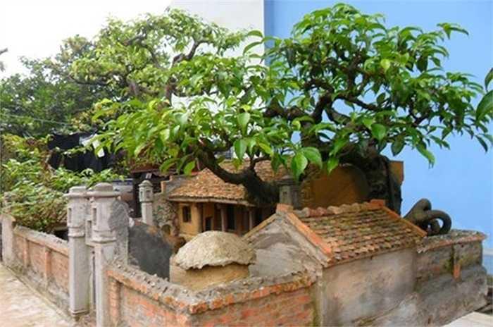 Ấn tượng về nét quê kiểng, mái nhà xưa và những gì thuộc về cổ xưa như cây đa, giếng nước, sân đình, vì vậy anh Nguyễn Ngọc Quý đã quyết định mua lại tiểu cảnh.