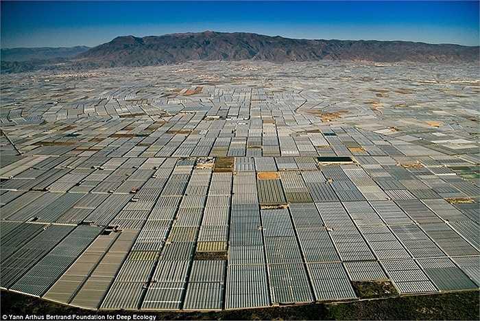 Nhà kính trải dài tít tắp tới tận cuối chân trời ở Almeria, Tây Ban Nha.