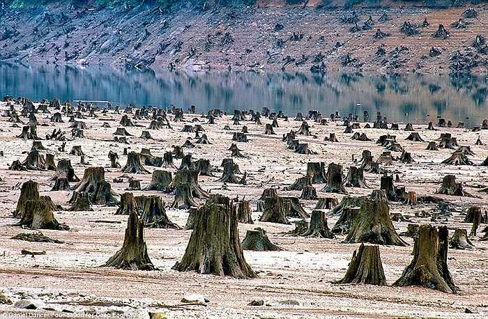 Một khu rừng bị san bằng để xây hồ chứa nước tại rừng quốc gia Willamette, Oregon.