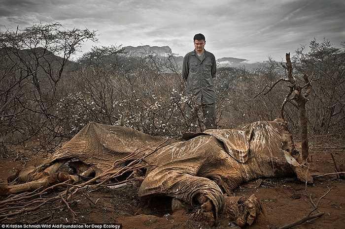 Hình ảnh một con voi chết mục ở Bắc Kenya.