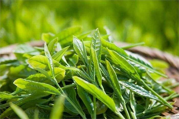 Trà xanh giàu chất chống oxy hóa giúp giải độc gan và làm sạch hệ thống tiêu hóa, ngăn ngừa ung thư. Caffeine trong trà xanh cũng có tác dụng lơi tiểu, giúp giảm thiểu sự trướng bụng và làm giảm cholesterol trong máu.