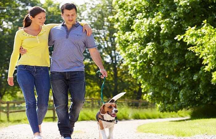 Chơi với thú cưng: Nghiên cứu của trường đại học Missouri-Columbia đã chỉ ra rằng, vuốt ve một chú chó chỉ trong 15 phút có thể tạo cảm giác thoải mái và sản xuất các hormone serotonin, prolacin và oxytocin cũng như giảm các hormone cortisol.